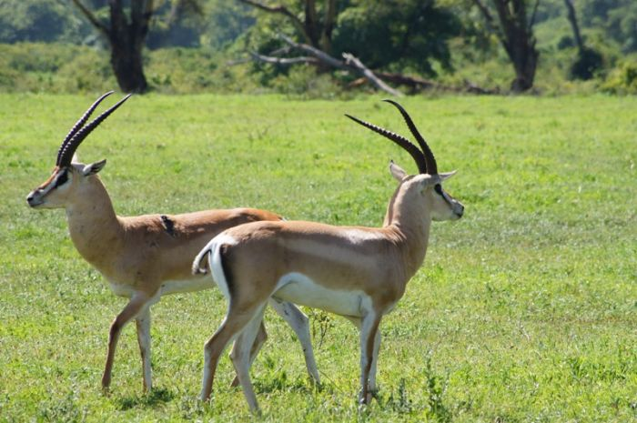 11 Days Safari And Beach Honeymoon