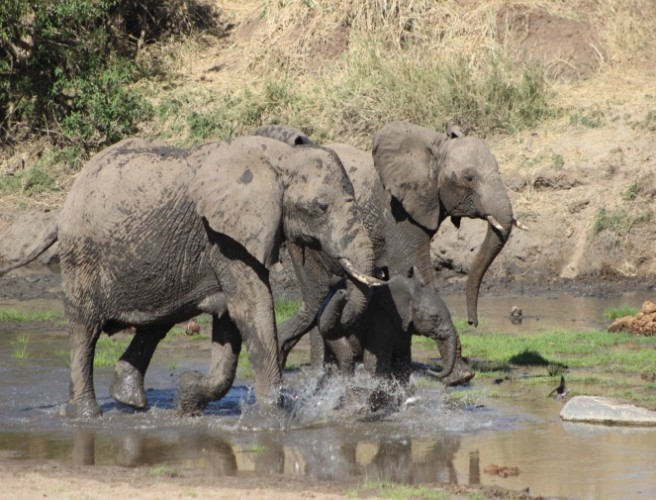 Elephant Family in Lake Manyara National Park