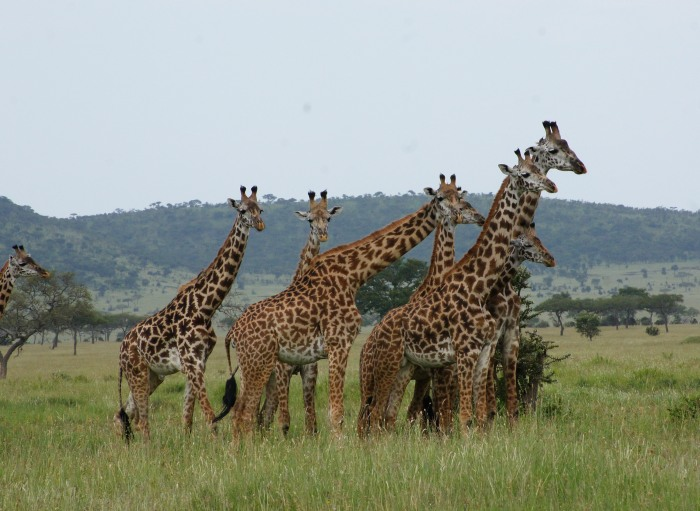 10 Day National Park Safari and Cultural Experience